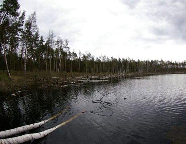 Озеро Смердячье Шатурский район