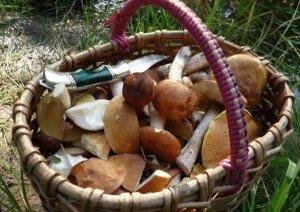 Какие грибы могут быть опасными