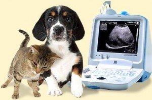 Лечение болезней у животных