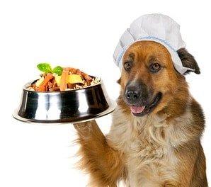 Пищевые добавки в питании животного