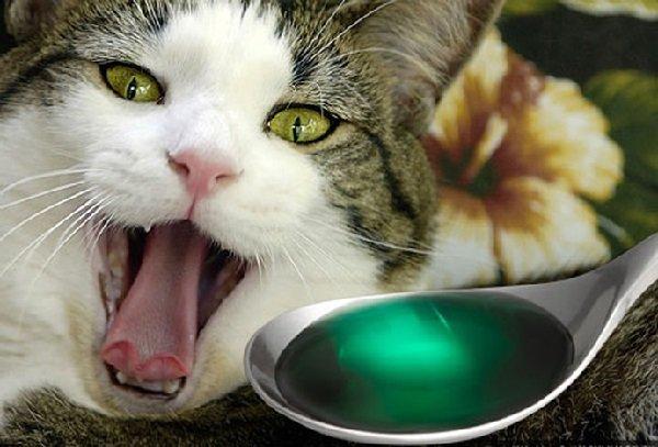 Влияние химических контаминантов на организм животного.