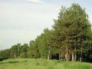 Защита лесов — так ли она необходима?