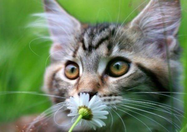 Здоровые животные без лекарств