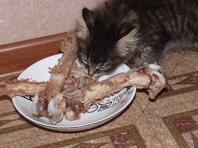Легкие закуски для животных.