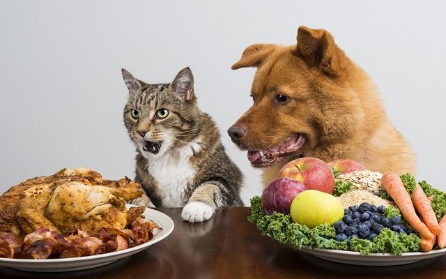 Легкие закуски для животных, для кошек и собак.