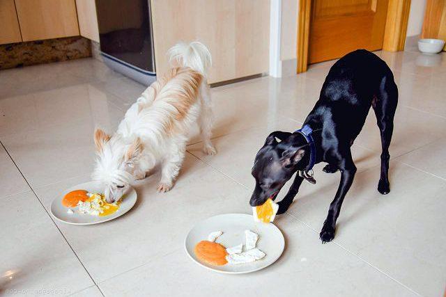 Яйца и молочные продукты в питании кошек и собак.