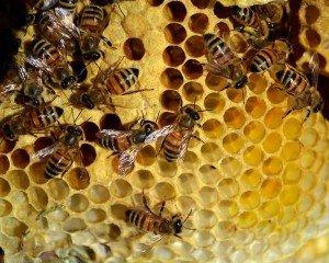 Пчелы и пчеловодство