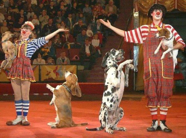 Про цирк и дрессировку животных