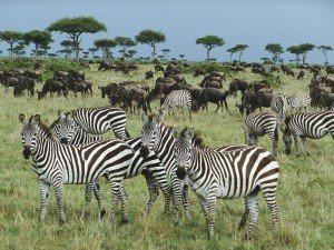 Адаптация животных к среде обитания