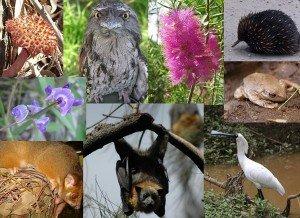 Видовое разнообразие растений и животных