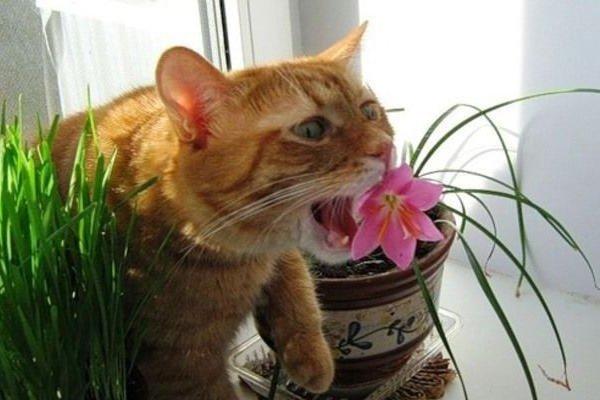 Опасные растения для кошек и собак