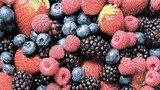 Экзерсисы со спелыми ягодами