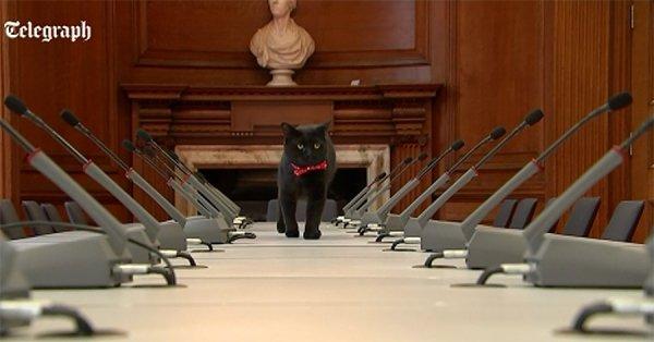 В Великобритании к власти стремится кот Кромвель