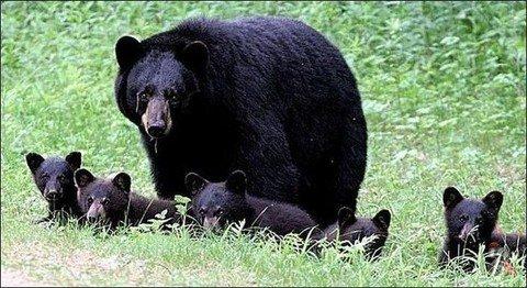 В Америке медведица напала на участницу марафона