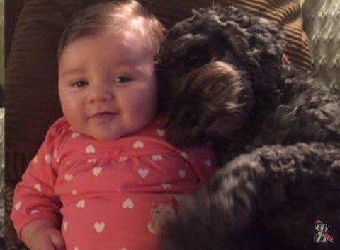 Преданность: во время пожара пес накрыл младенца своим телом, приняв огонь на себя