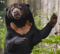 Ужасная контрабанда: браконьеры перевозили в автобусе замороженные лапы медведей