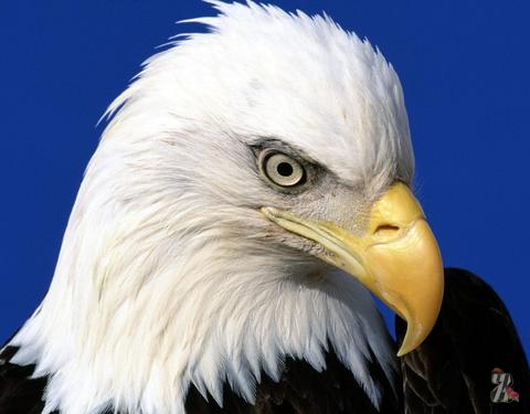 В США орел сорвал планы строительства делового комплекса