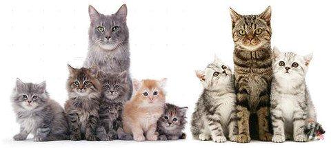Составлен рейтинг стран с наибольшим количеством котов