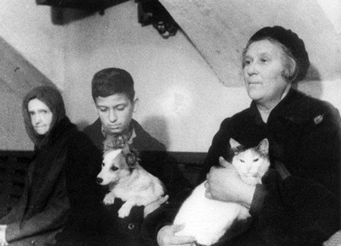 Как «мяукающая дивизия» Ленинград спасла, или Почему ценнее кошки зверя нет
