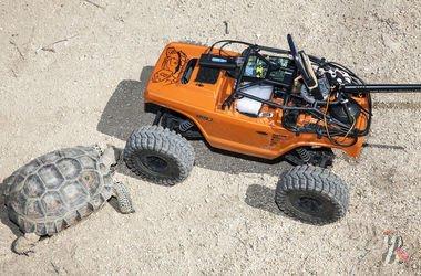 К каждой редкой черепахе в пустыне приставили охранника — машинку-робота