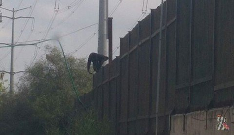 Как в Израиле из зоопарка обезьяны сбежали