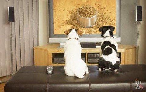 Ученые рассказали, что собаки видят по телевизору