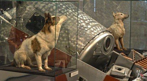В Москве открылась выставка, посвященная собакам-космонавтам