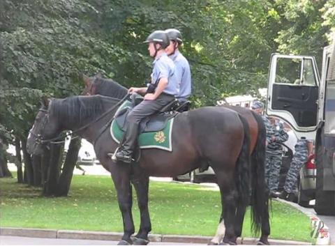 Московская полиция закупает для своих лошадей солярии с лифтом и душем