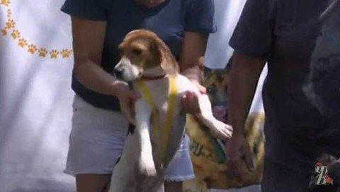 В Бразилии прошла первая Олимпиада для собак