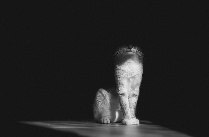 Мистические животные: 15 завораживающих кадров таинственной жизни черных котов