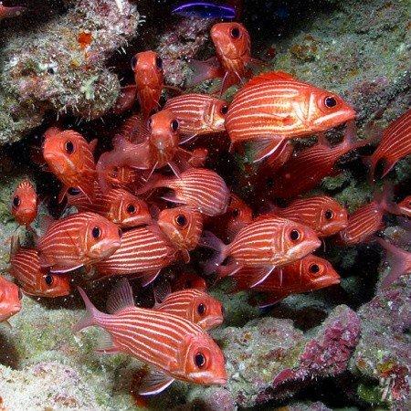 В США создан крупнейший морской заповедник в мире