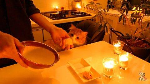 Японец приготовил своему коту на день рождения праздничный ужин