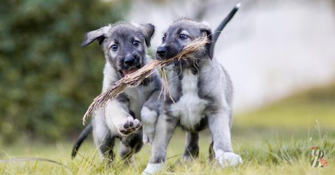 В Южной Африке родились уникальные щенки