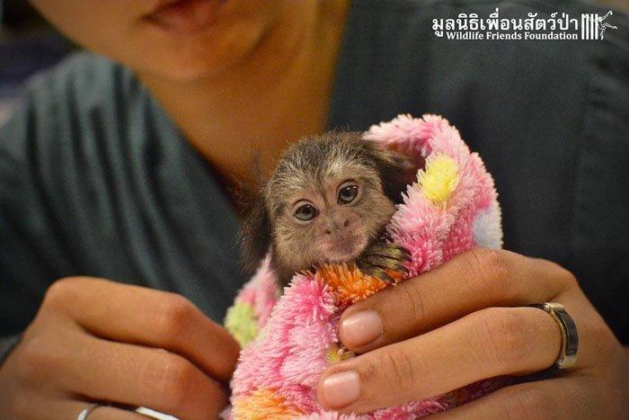 Макс — обезьянка, которой очень повезло попасть в любящие руки