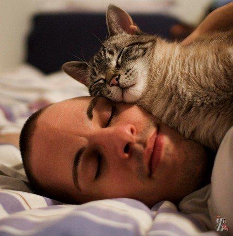 Коты — лучшее природное снотворное