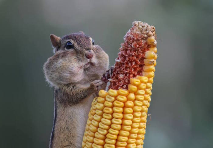 Самые смешные фотографит животных, присланные на конкурс Comedy Wildlife Photography Awards — 2016
