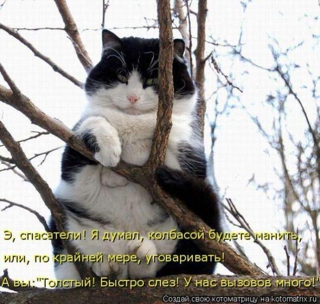 Лучшие котоматрицы недели 2