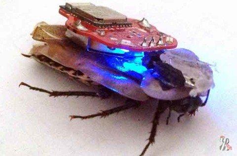 Королевское общество защиты животных выступило в защиту… тараканов