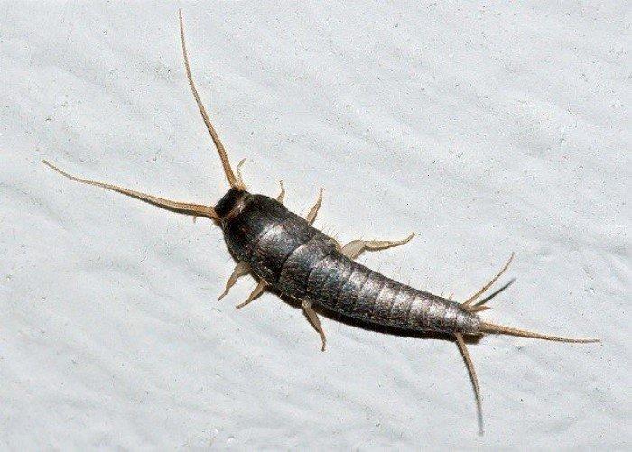 Самые ненавистные насекомые, известные человеку