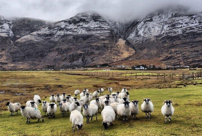 10 занимательных фактов о Шотландии — стране килтов, виски и… кенгуру