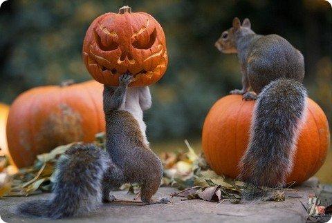 Хэллоуин отмечают не только люди…