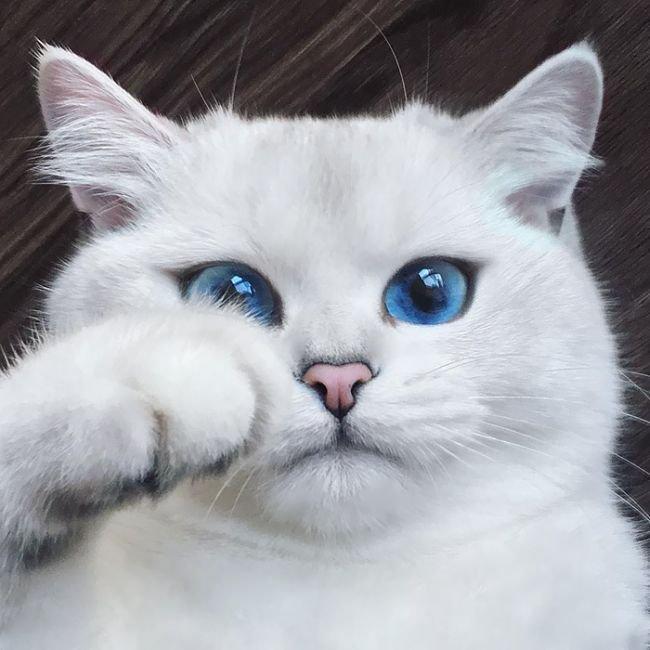 Подборка красивых кошек