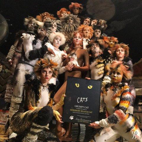Интернет-звезда Сердитый котик посетил мюзикл «Кошки» в Нью-Йорке