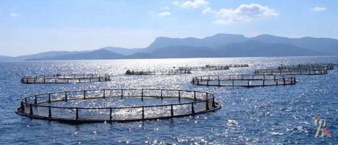 Из рыбной фермы в Дании вырвались на свободу 80 тысяч особей форели