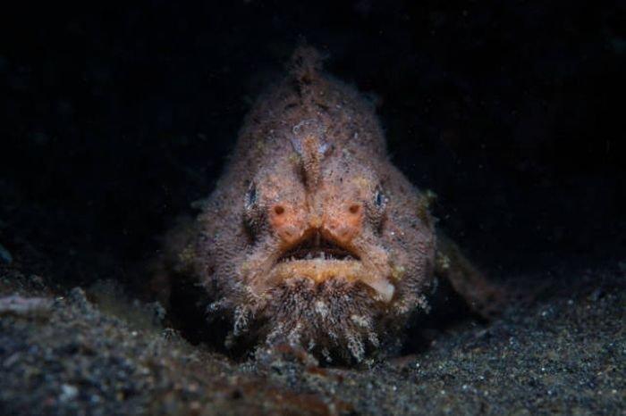 Чудовищные обитатели глубин океана