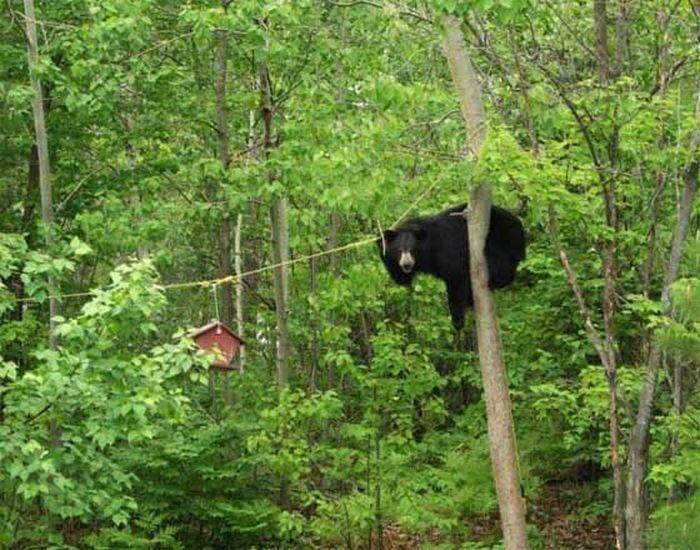 Медведь решил полакомиться медом