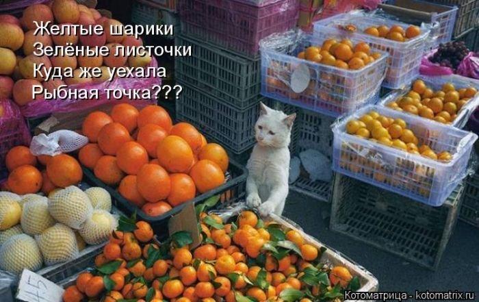 Лучшие котоматрицы недели 7