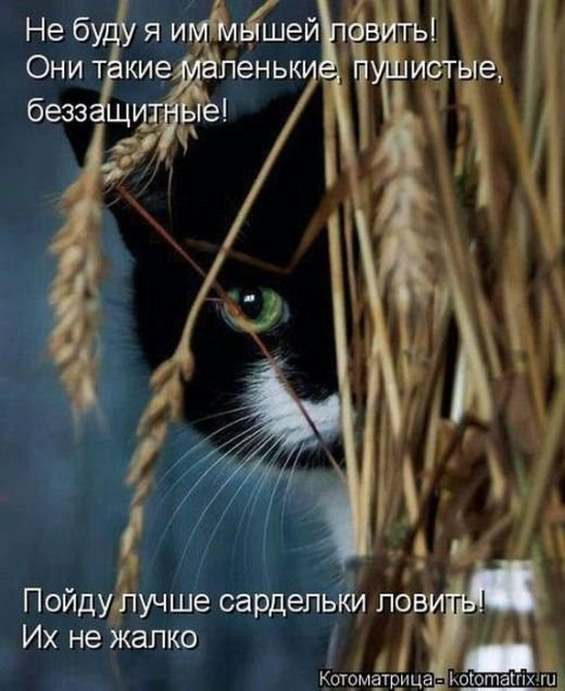 Лучшие котоматрицы недели 3