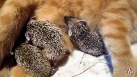 Мир не без добрых… животных
