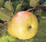 Бабушкины яблочные сказки